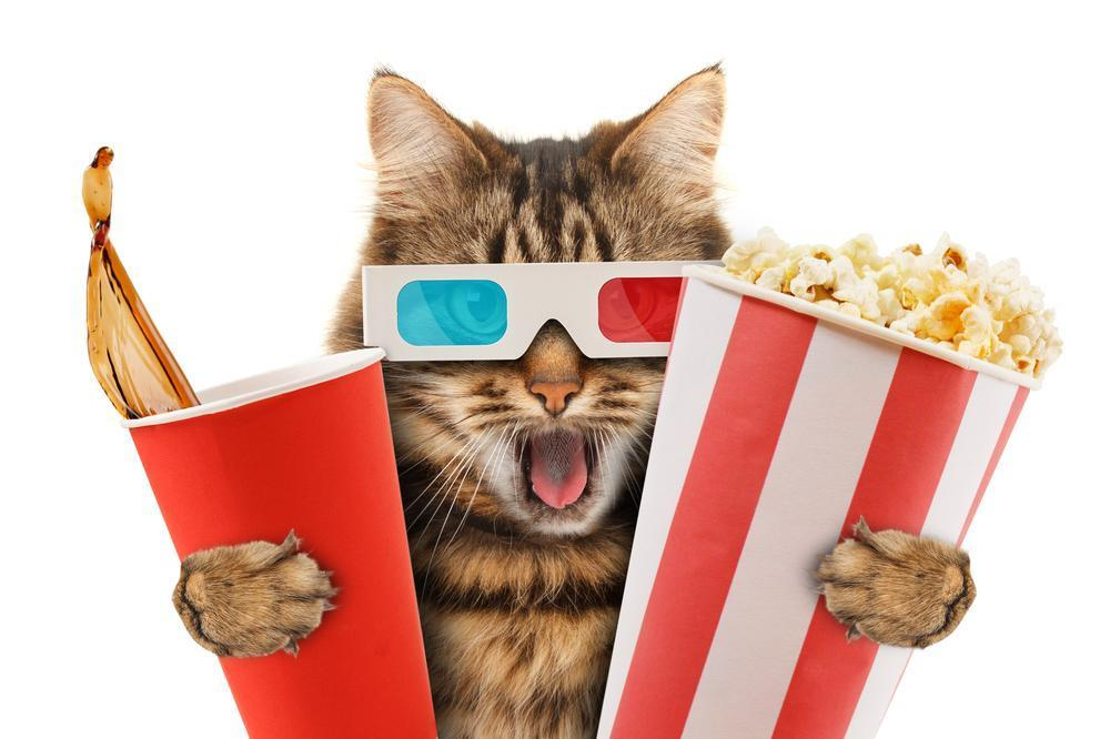top 5 filmes de gatos