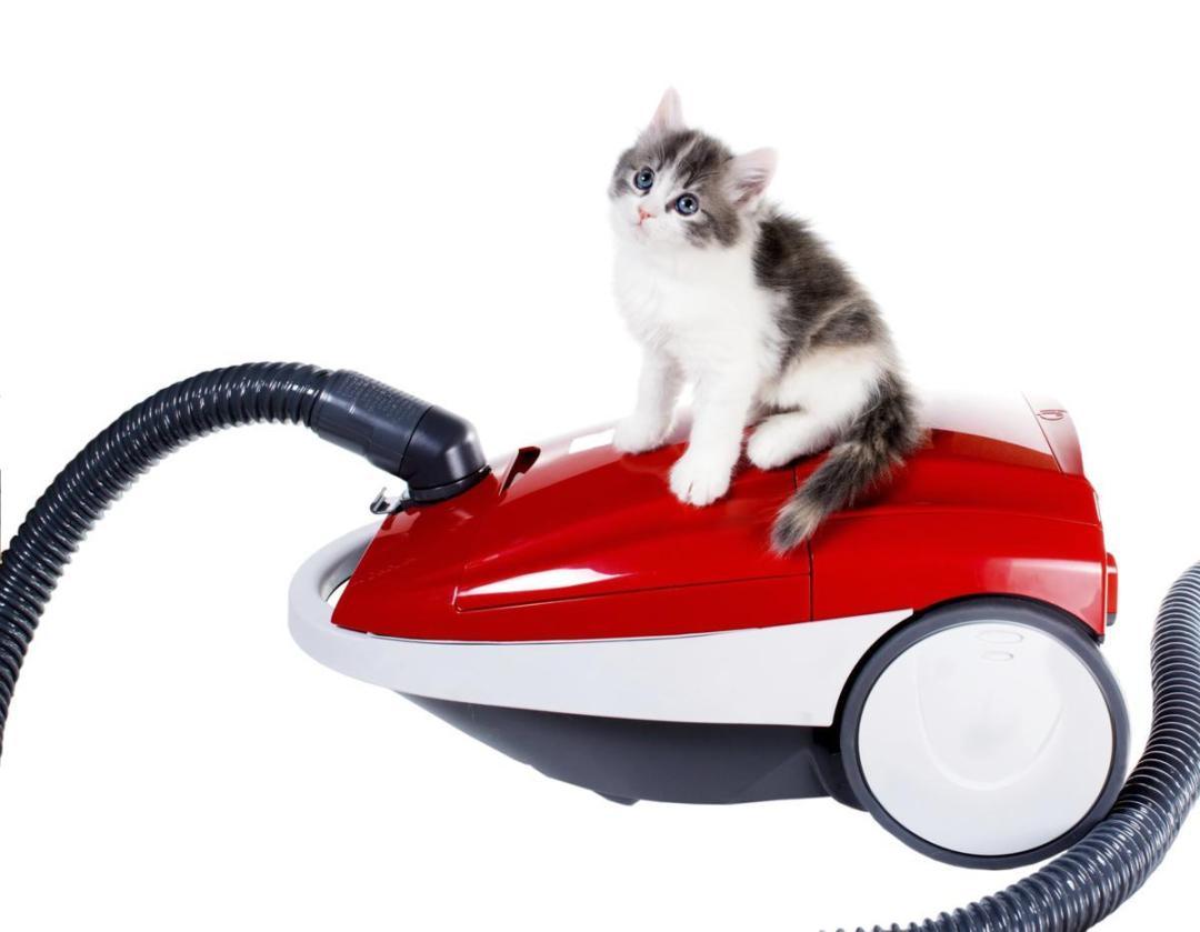 limpeza-de-casa-com-gatos
