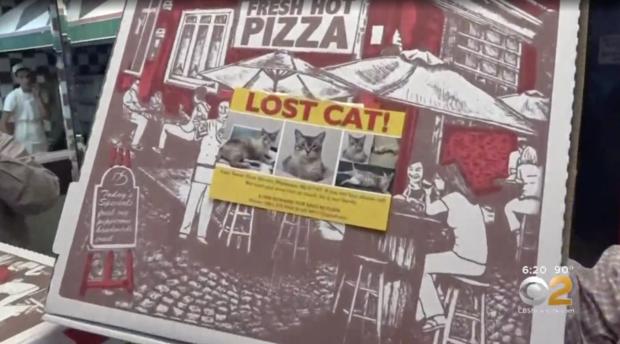 gato-perdido-em-caixa-de-pizza