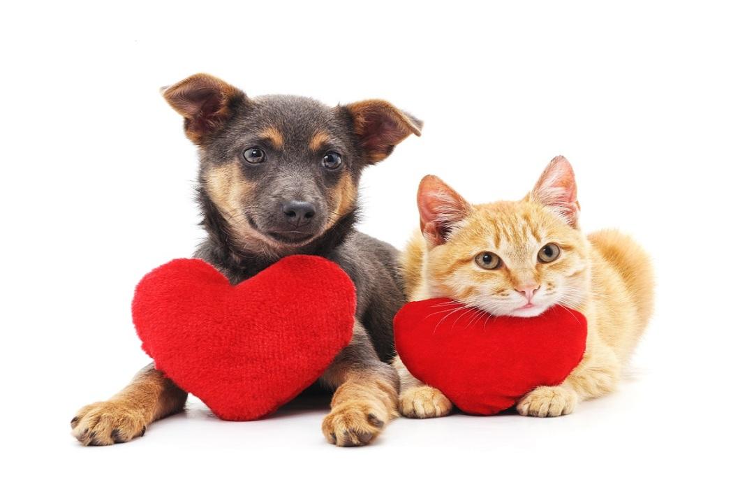 problemas no coração de gatos e cachorros