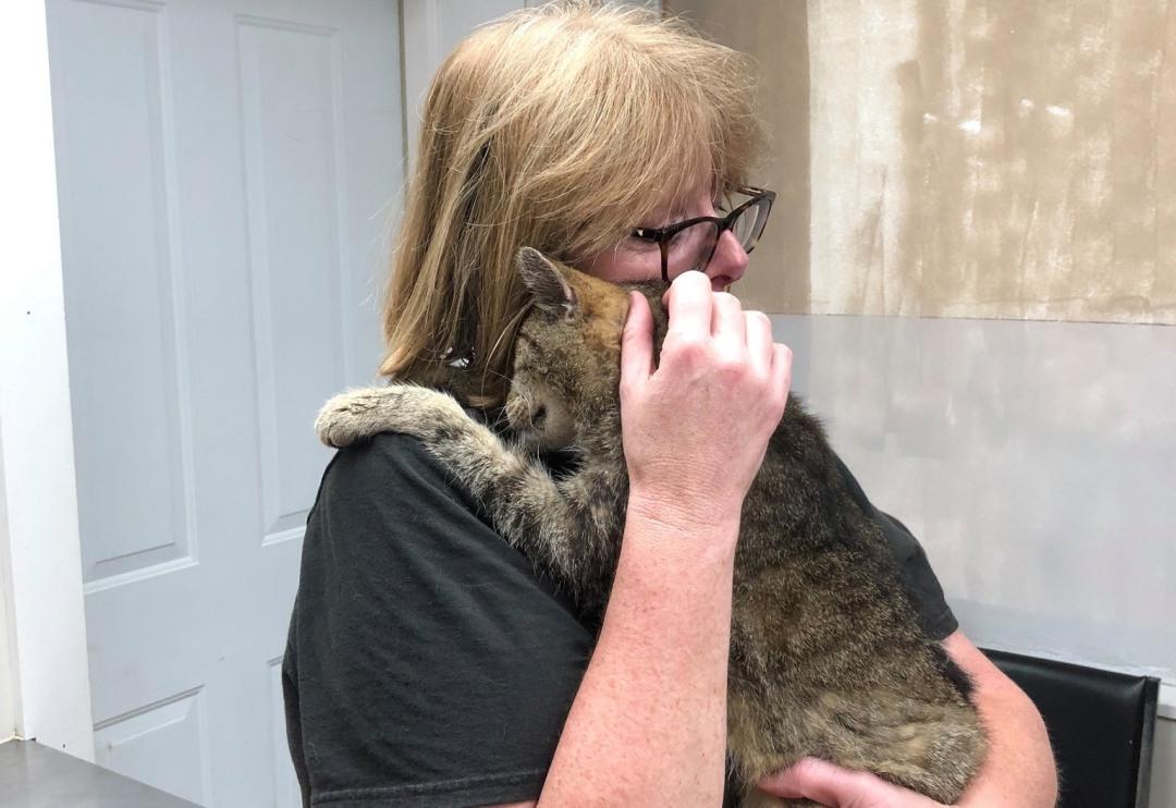 Gato reencontra sua tutora