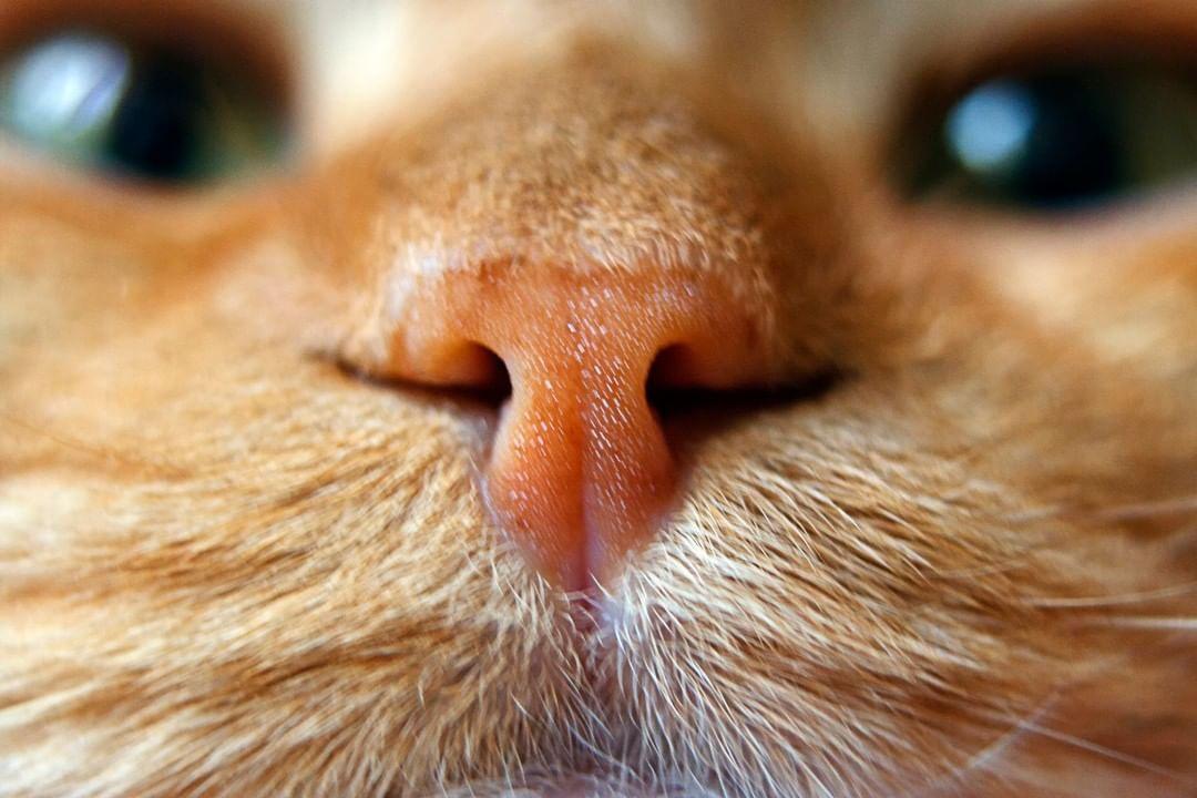 curiosidades sobre gatos