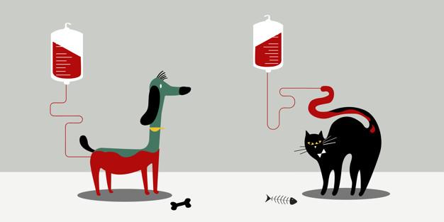 doação de sangue para animais