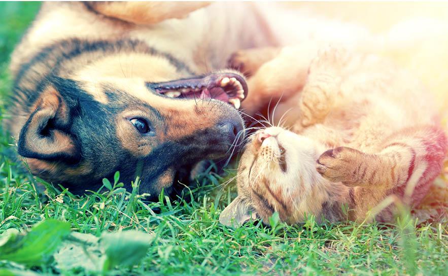 cuidados com os animais no calor