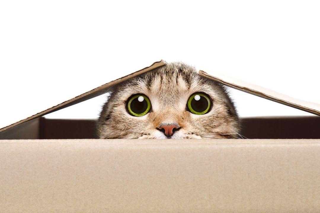 Gato na caixa