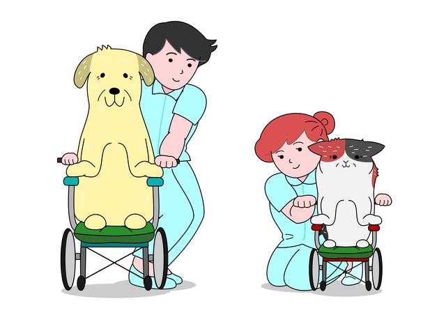 como cuidar de um animal idoso