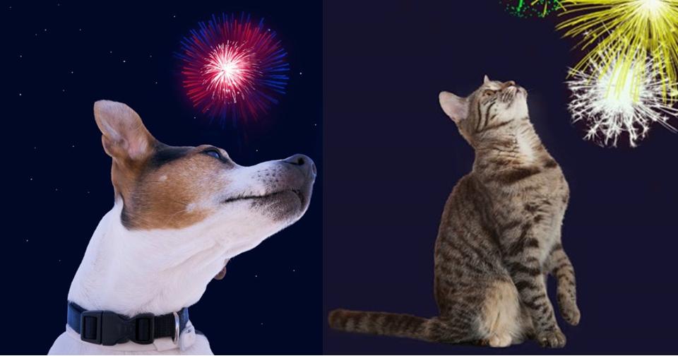 riscos dos fogos de artificio para animais