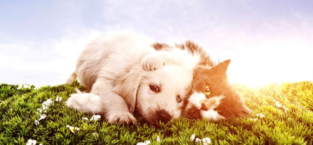 pets devem usar protetor solar