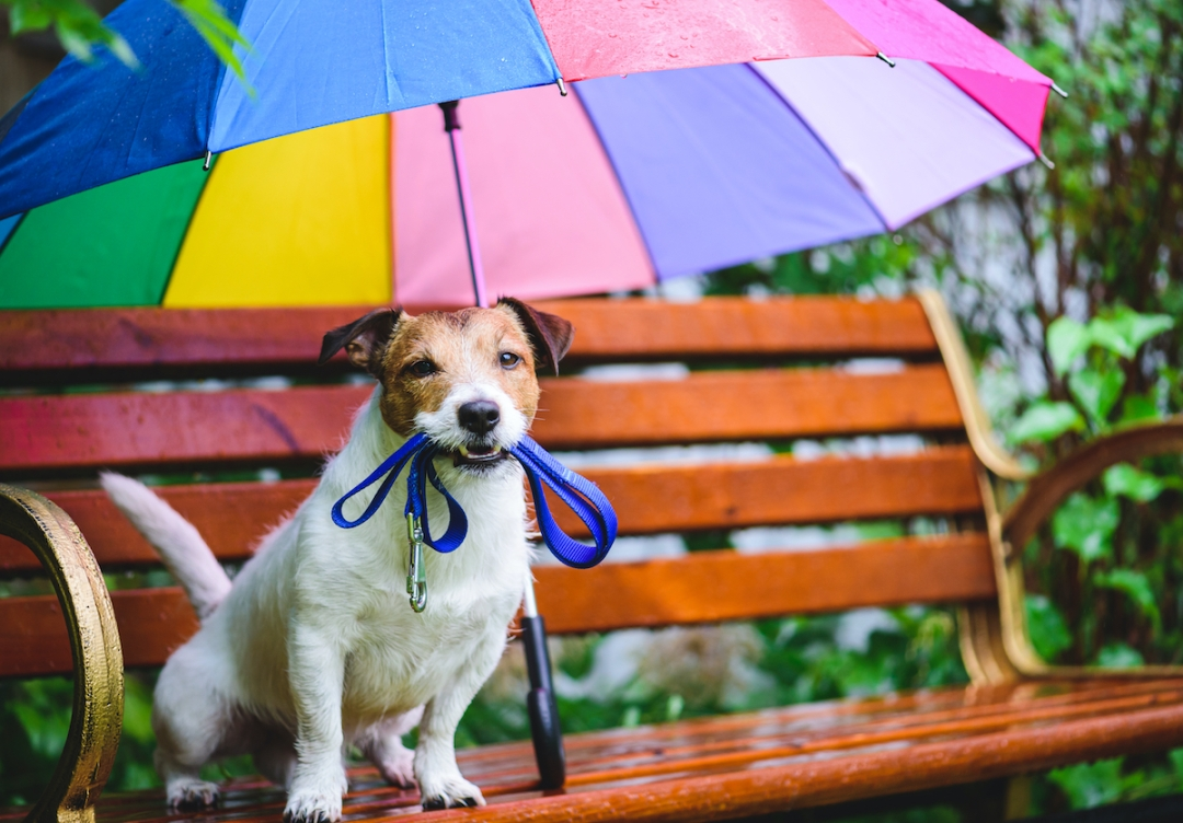 cuidados com os cães durante as chuvas