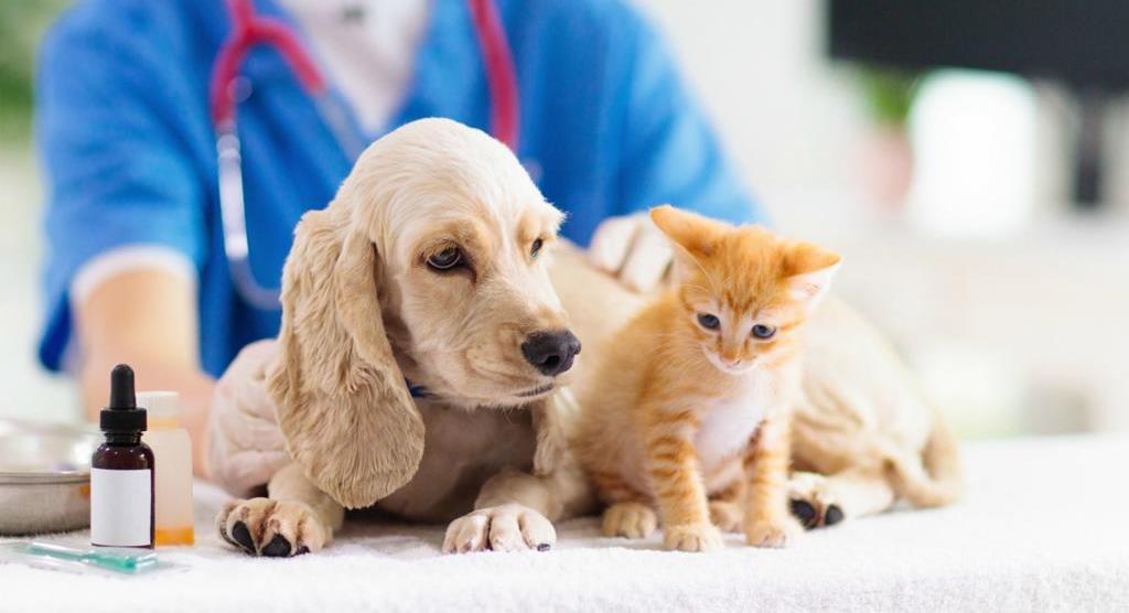 Plano de Saúde para Animais