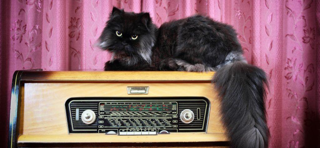 música para reduzir o stress em gatos