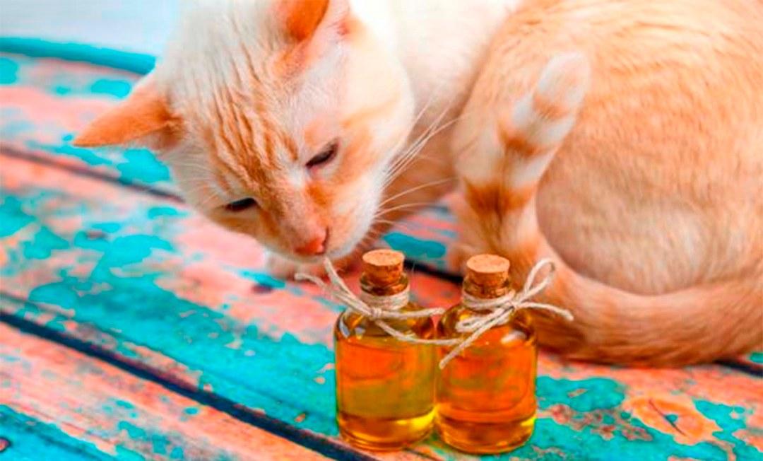 oleo-essencial-e-gatos
