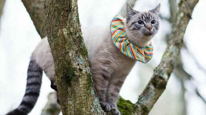 Cat-Wearing-Birdbesafe-Cat-Collar-Birdsbesafe-Website