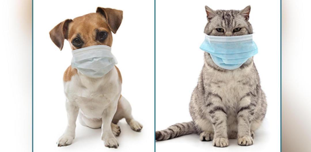 coronavirus em animais