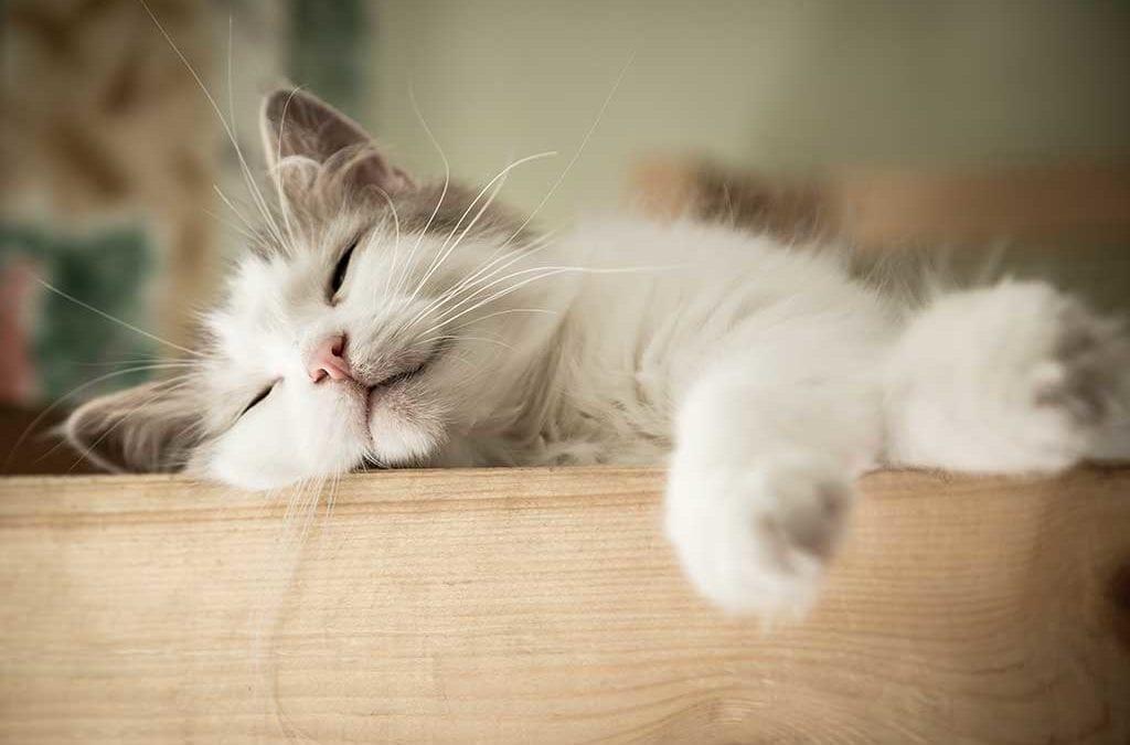 6 dicas de segurança pra gatos